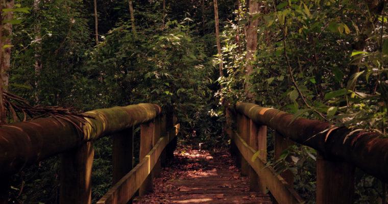 De ultieme (safari)reis naar geluk – de innerlijke reis