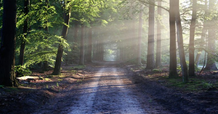 De verlichtende werking van bomen op ons fysieke én mentale lichaam